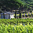 vendanges en Provence - chapelle - 080901-V